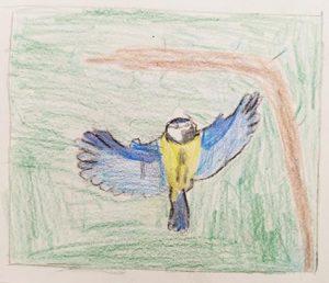 Croquis de mésanges bleues - aquarelle - crayon de couleur - dessins d'enfants - ateliers terreaux - Estelle Meyrand